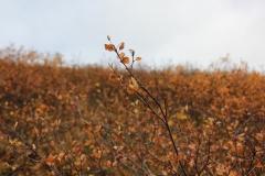 kvitnykja-2015-10-11-15.53.19